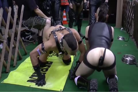 Folsom Berlin - bondman And Doggyplay 2 From 2014