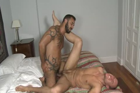 European Bear oral sex With ejaculation