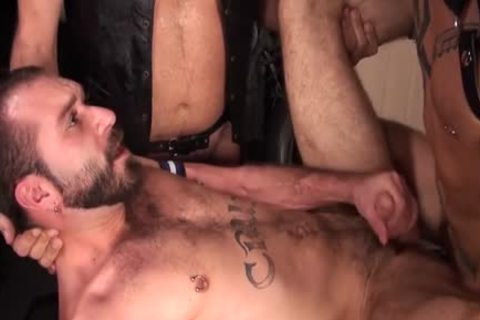 large dong Bear trio And cumshot