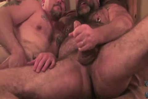 Two homo Bears hammer Each Other bare