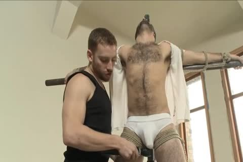 bushy stud Is tied Up For The First Time And Edged